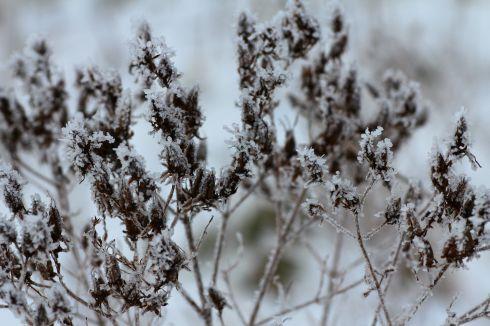 Rimfrost på marken *1