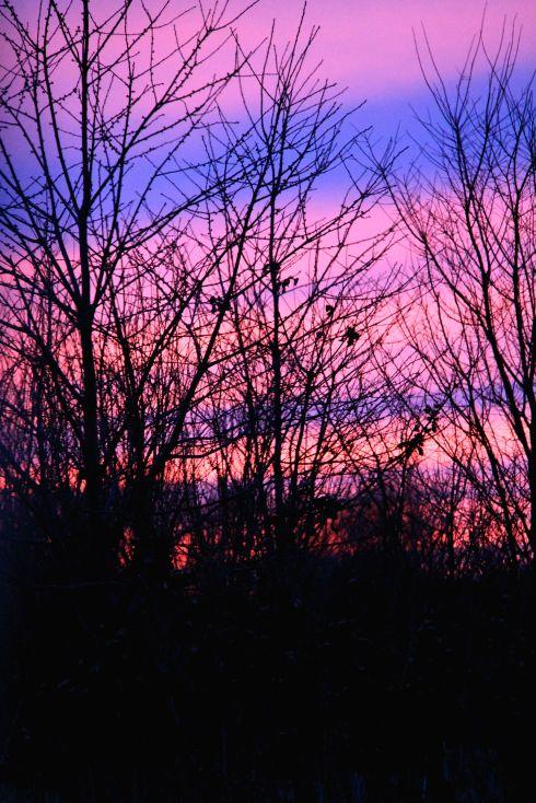 Solnedgang *1