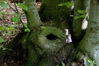 Tirsdagsskovens toilet