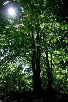 Tirsdagsskoven