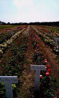 Frans Bruuns rosenmark